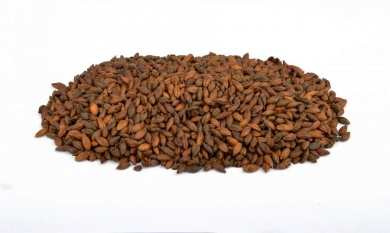 Chocolate 800-1000 EBC 1kg Brewferm